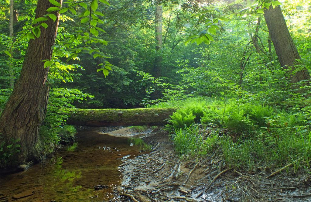 The Tionesta Scenic and Research Natural Areas by Nicholas A. Tonelli from Pennsylvania, USA